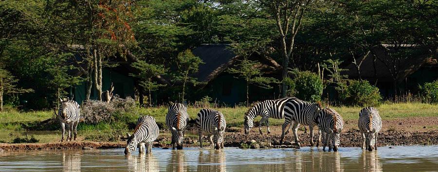 Kenya a 360° - Kenya Zebras at a waterhole