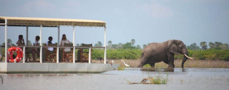 Siwandu - Perfect game viewing from Siwandu's pontoon boat