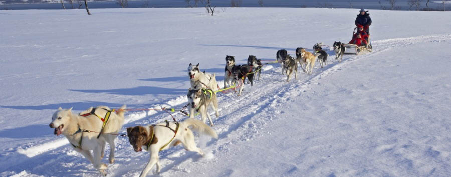 Arctic - Sled Dog Excursion