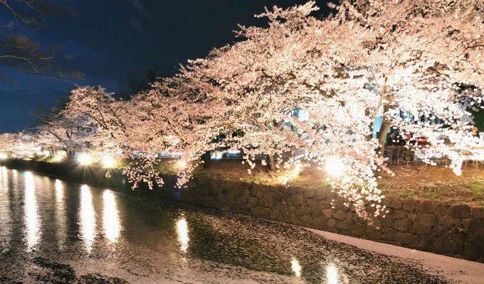 Matsumoto, Cherry Blossom - Japan