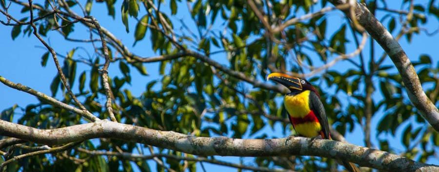 Puerto Bemberg: aria, luce e giungla - Argentina Posada Puerto Bemberg, Birdlife