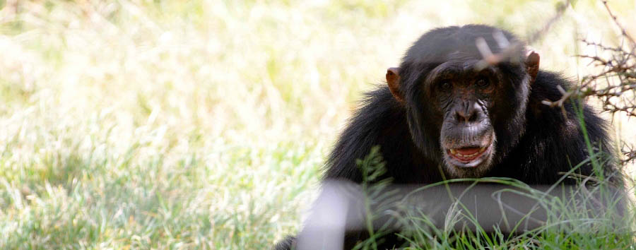 Serena Sweetwater's Tented Camp - Chimpanzee Sanctuary