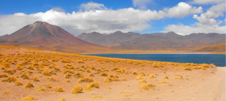 Mosaico cileno: Deserto di Atacama - Chile Atacama Desert: Miscanti Lagoon