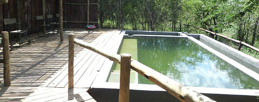 Chobe Bakwena Lodge - Pool area