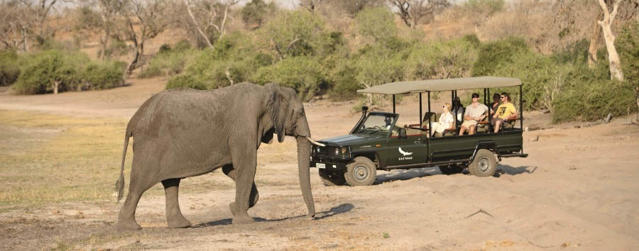 %26Beyond+Chobe+Under+Canvas+-+Game+Drive+in+the+Chobe+National+Park