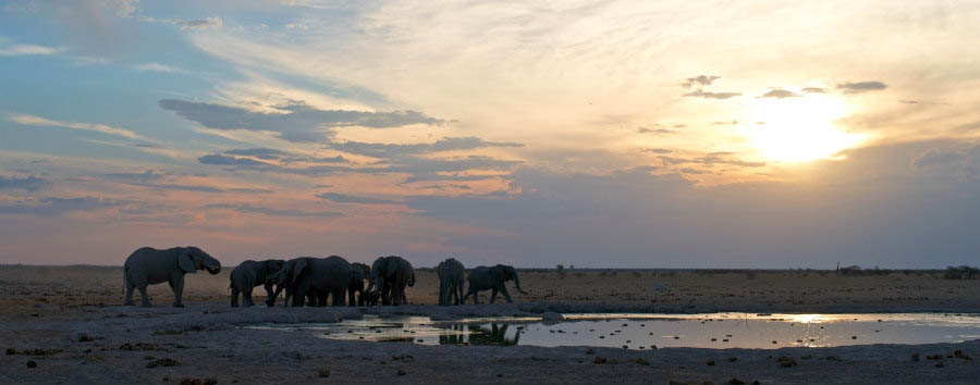 Botswana, acqua e deserto - Botswana Nxai Pan, Elephants at The Water Hole