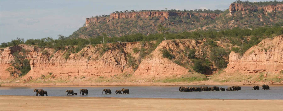 Zimbabwe - Elephants in the Save Valley Conservancy