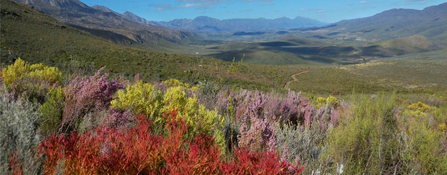 Sudafrica: i diari della motocicletta - South Africa Swartberg Game Reserve, Fynbos and Mountains