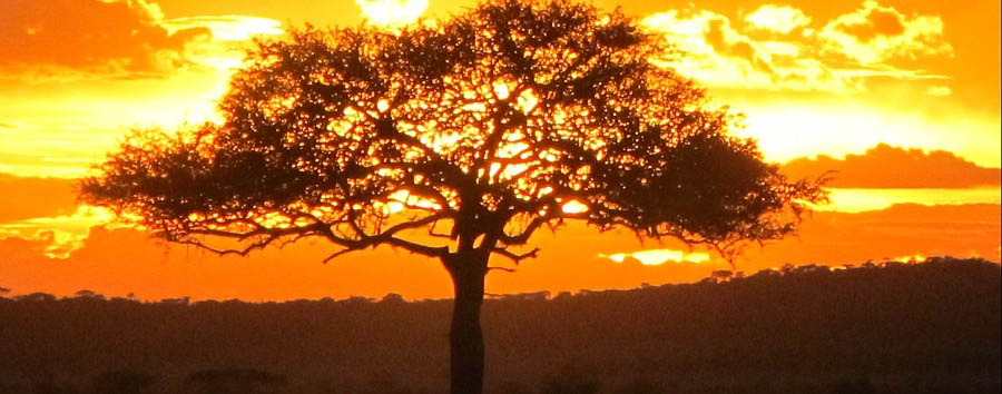 Mosaico Tanzania - Tanzania Beautiful Sunset View in Serengeti