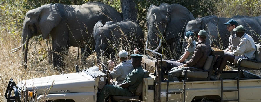 Le gemme dello Zambia - Zambia South Luangwa National Park, Elephants encounter during a game drive