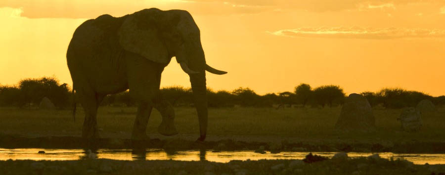 Mana Pools Explorer - Zimbabwe Elephant at Sunset in The Mana Pools National Park