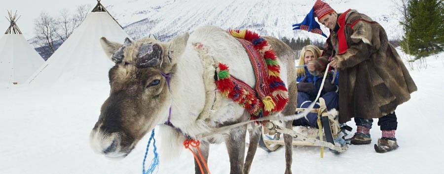 A casa di Babbo Natale - Arctic Prepairing the Reindeer Sled