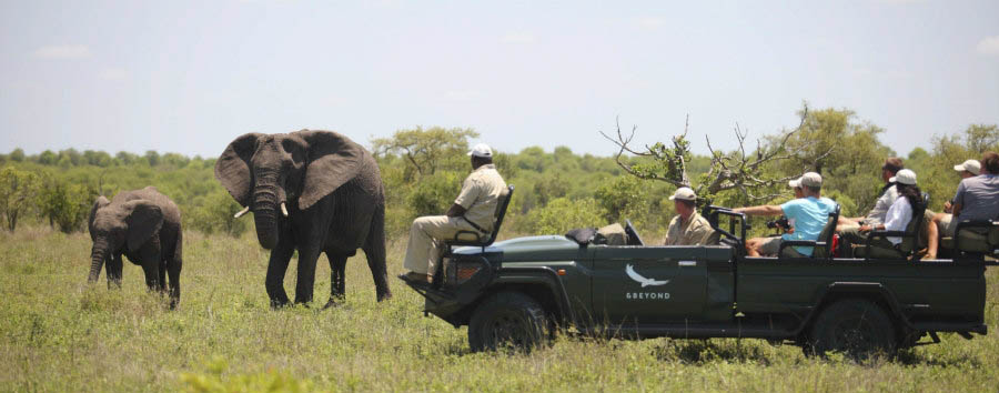 Ngala+Safari+Lodge+-+Game+Drive