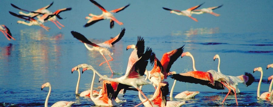 Wildlife & Warriors - South Africa Flamingos in St. Lucia Wetlands Park