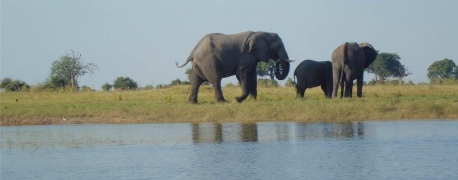 Navigando lungo il Chobe - Botswana and Namibia Elephants on Chobe River banks