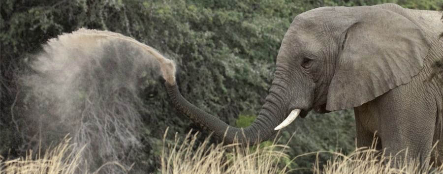 Deserto, fiumi e cascate - Namibia Elephant in The Kaokoland
