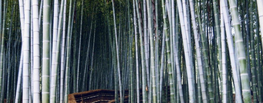 Kyoto Imperiale - Japan Kyoto, Sagano Bamboo Forest