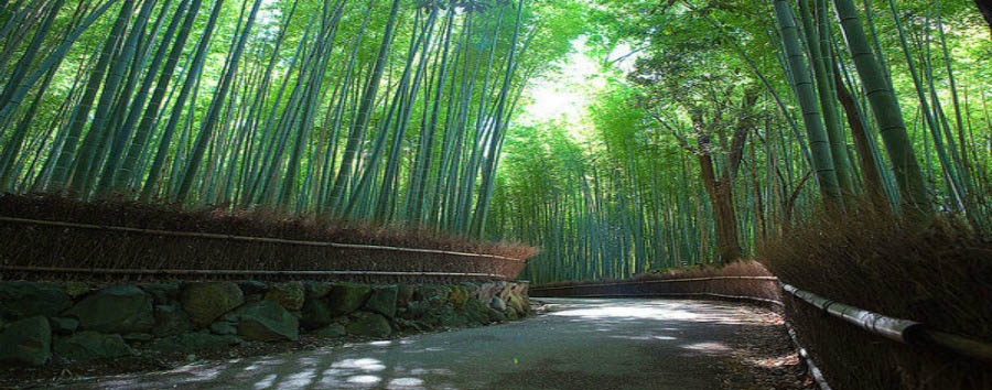 Le due anime del Giappone - Japan  Kyoto Arashiyama District, Sagano-Bamboo Forest