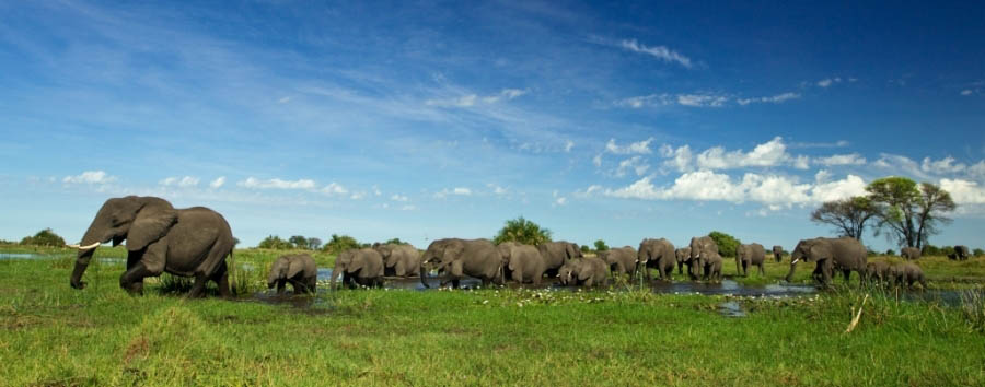 Duba+Plains+Camp+-+Elephants+in+waterhole