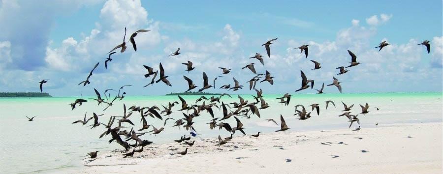 La Stella del Sud - French Polynesia Birds on Teti'aroa Beach © Cécile Gaspar