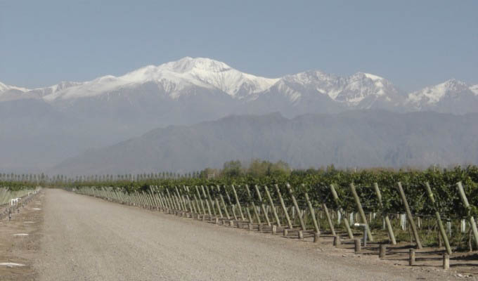 View of Mendoza Vineyards - Argentina