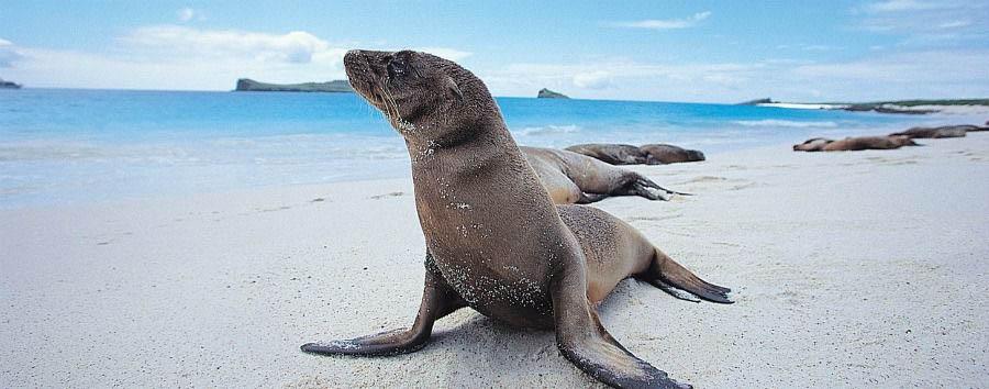 Ecuador: tra Terra, Cielo e Mare - Ecuador Isabela Island, Sea Lion