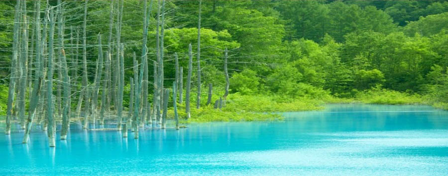 Wild Hokkaido - Japan Biei, Lake near the city