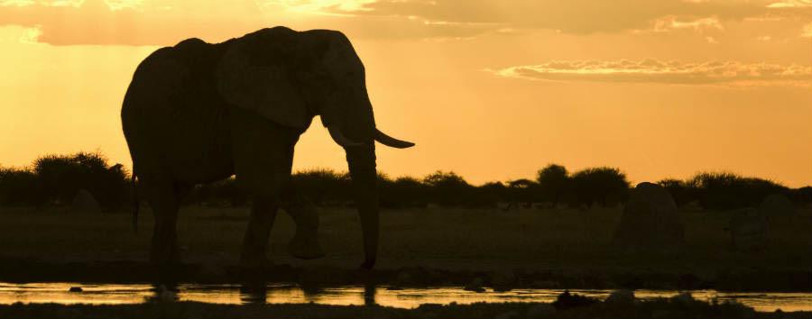 Viaggio nella terra dei San  - Botswana Elephant in Makgadikgadi Pans © African Bush Camp