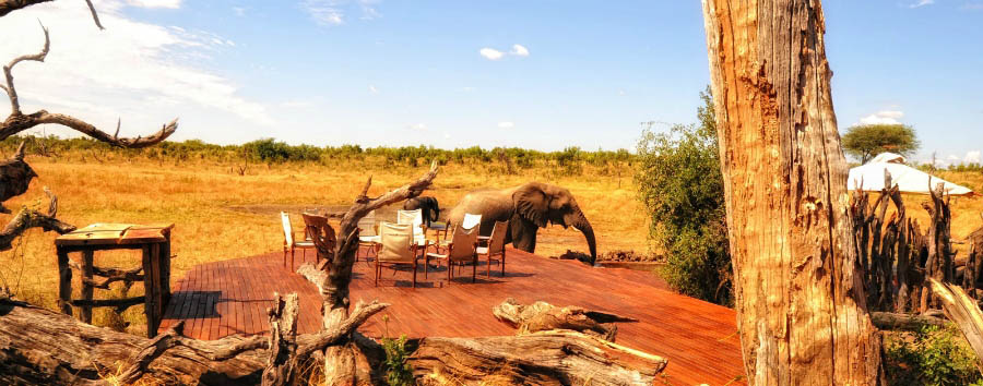 Somalisa Camp - Elephants drinking at the waterhole