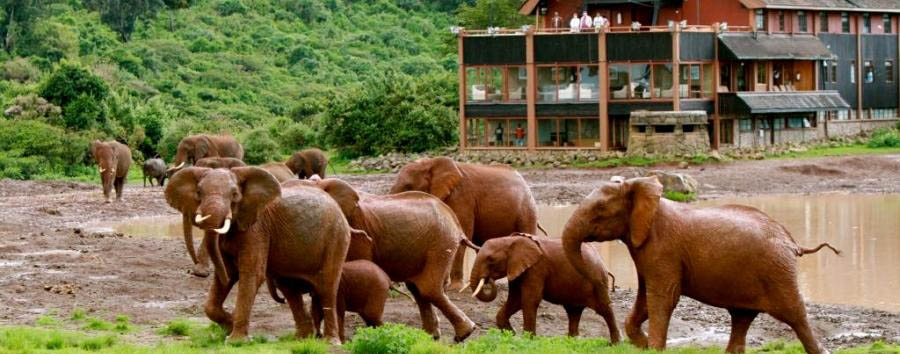 Kenya Highlights - Kenya The Ark: a perfect view point to spot wildlife
