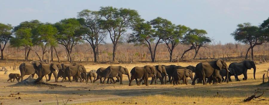 Zimbabwe, gioiello d'Africa - Zimbabwe Elephants in the Hwange National Park