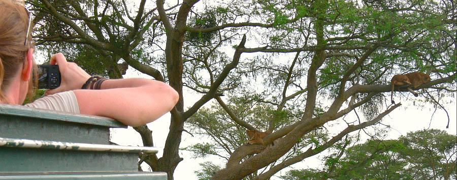 Uganda, perla d'Africa - Uganda Ishasha, Game Drive