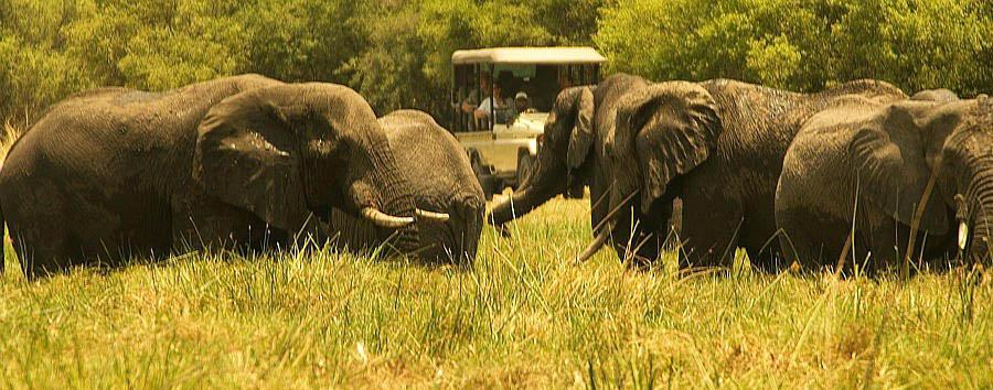 Dal Kruger alle Victoria Falls - Zimbabwe Game Drive in Hwange National Park