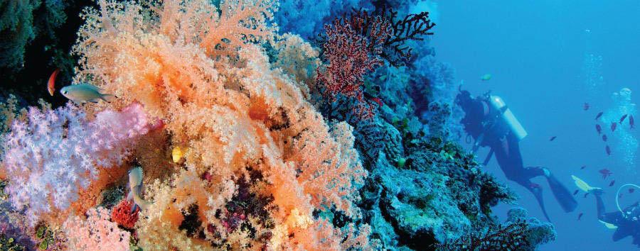 Fiji, mare a Wakaya Island - Fiji Wakaya Island, Underwater Marvels