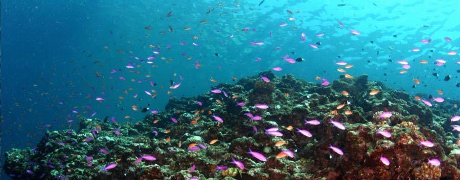 Mare a Okinawa: Kohamajima - Japan Okinawa Underwater © JNTO