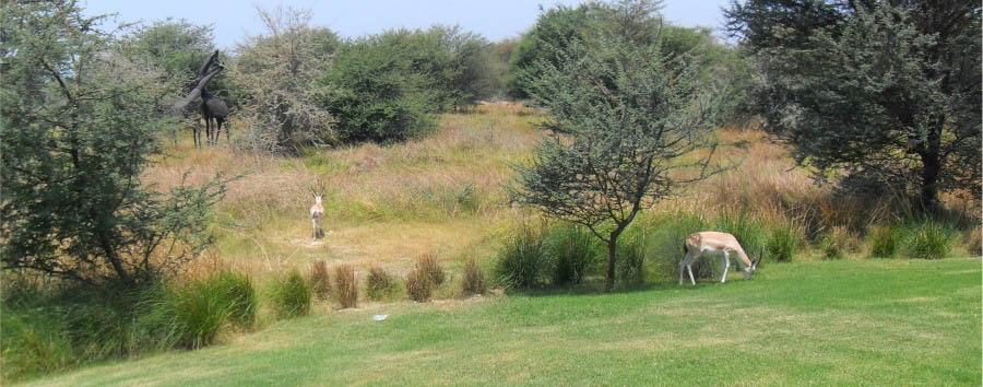Anantara Sir Bani Yas Island Al Sahel Villa Resort - Gazelles