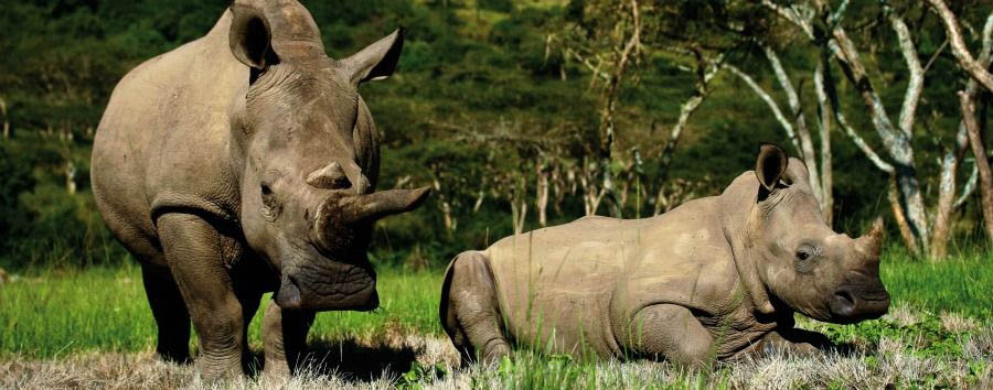 South Africa Luxury Fly-in Safari - South Africa Rhinos in Kruger National Park