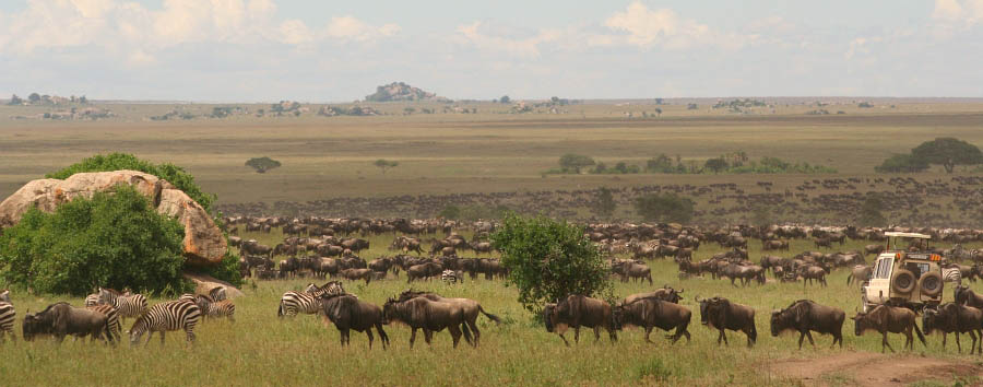 East Africa Migration Discover - Tanzania Serengeti National Park, migration dave