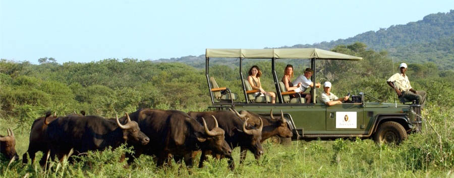 African Rainbow - South Africa Game Drive in Thanda Private Game Reserve