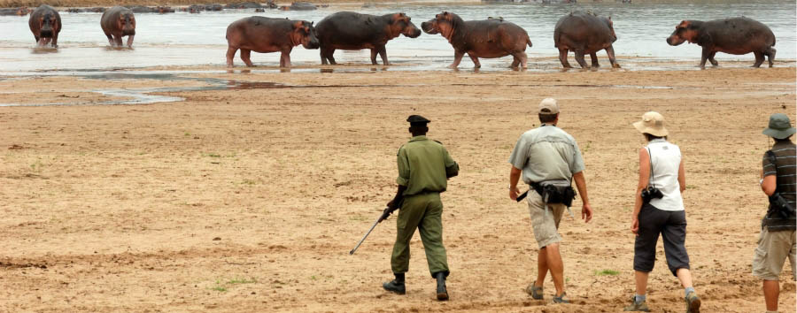 Mwaleshi Camp - Walking safari