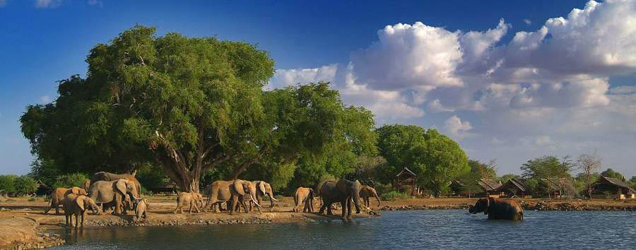 Satao Camp - Elephants at the waterhole