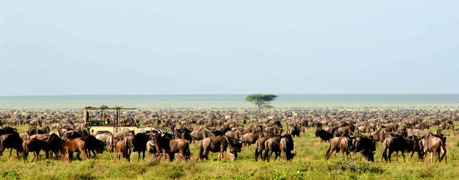 Serengeti Safari Camp - Game drive during the Great Migration