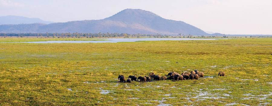 Simply Malawi - Malawi Liwonde National Park