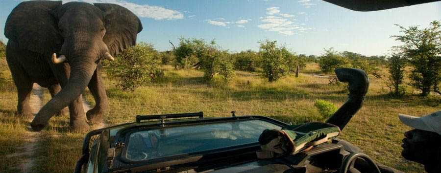 Unique Botswana Experience - Botswana Game Drive in The Selinda Private Game Reserve