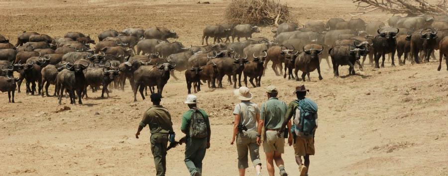 Chicoko Tree Camp - Walking safari