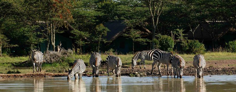 Serena Sweetwater's Tented Camp - Wildlife at waterhole
