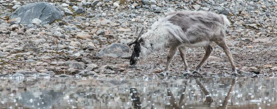 Artico: le tre perle dalle Highlands all'alto Artico - Artico Gnu