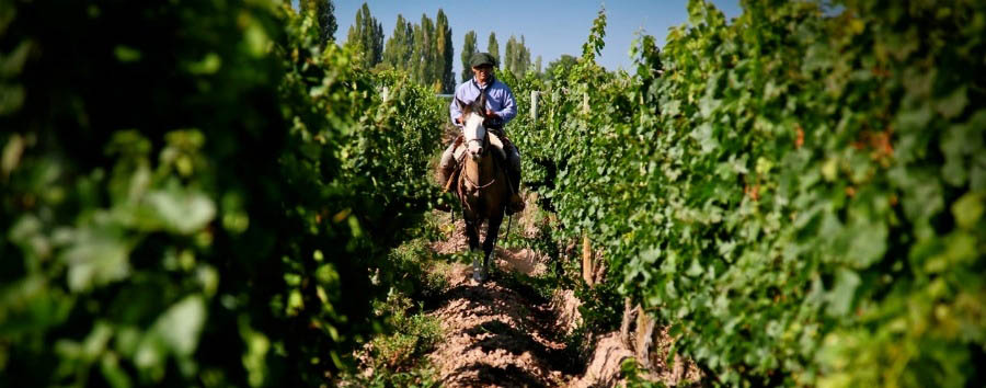 Argentina - Entre Cielos, Horse Riding in the Vineyards