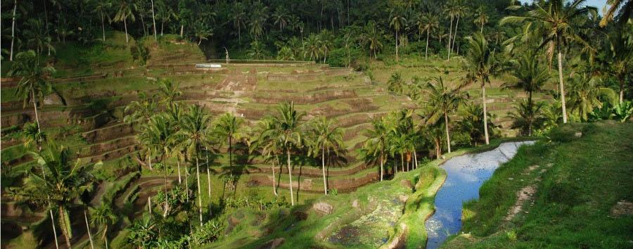 Bali e Java, tra crateri e piantagioni - Indonesia Bali, Tegallang Rice Terrace © William Cho