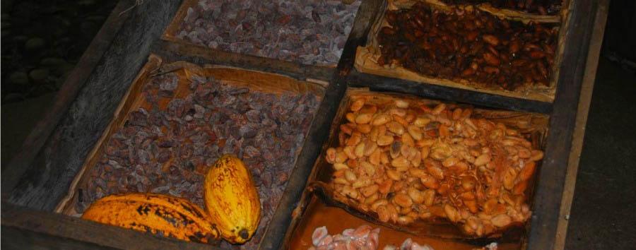 Costa Rica Nature Adventure - Costa Rica Tirimbina Reserve, Chocolate Fruits